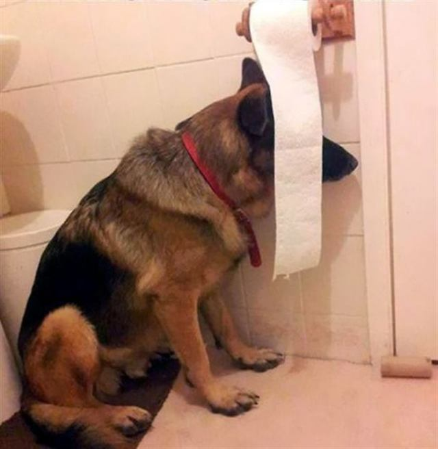 Собаки, которые совершили шкоду и ни капли не жалеют об этом