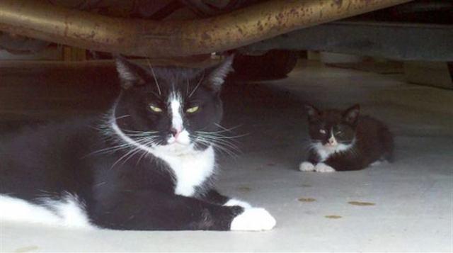 Мамы кошки и их маленькие копии