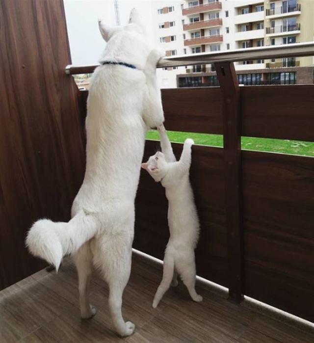 Семья подыскивала друга-котёнка для своего щенка – как удачно, что они повстречали уличную кису!