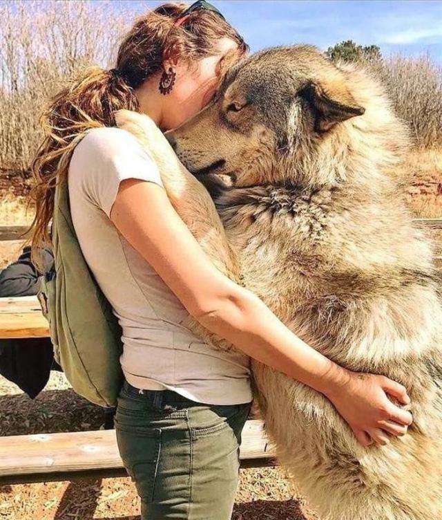 Волкособы покорили мир. Откуда взялись эти красавцы, все виды пород с фото. Потрясающе!