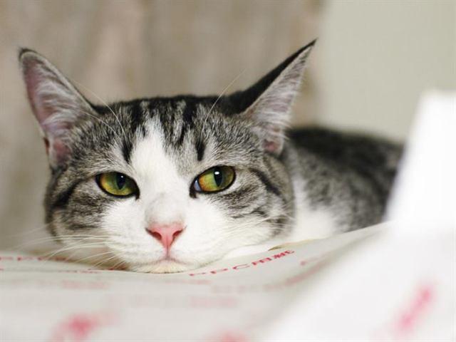 5 доказанных наукой фактов, что кошки продлевают человеку жизнь