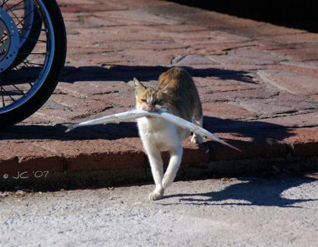 Забавные котики, которые попались на воровстве