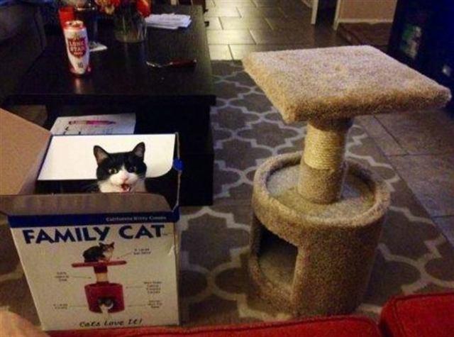 15 фото, которые поймет только тот, у кого есть кот