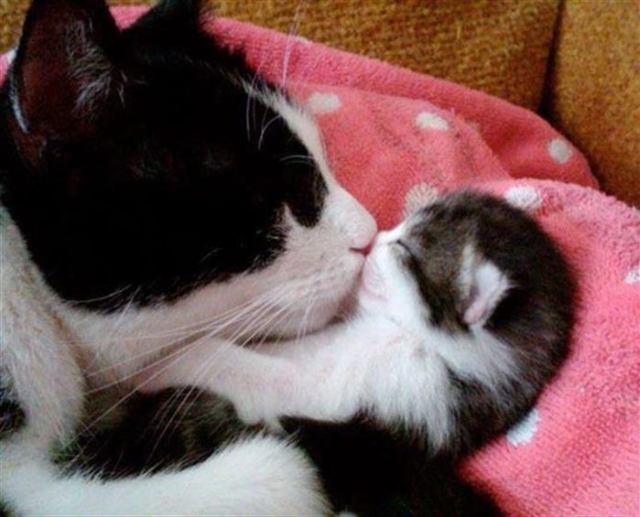15 фото мам и их маленьких копии