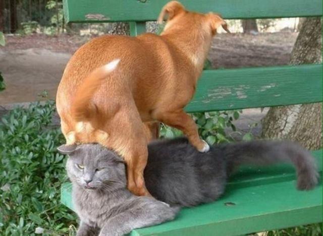 И у животных случаются фэйлы