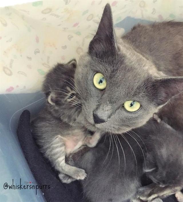 Робкая мама-кошка больше не страшится людей, ведь они позаботились о её маленьких детях!