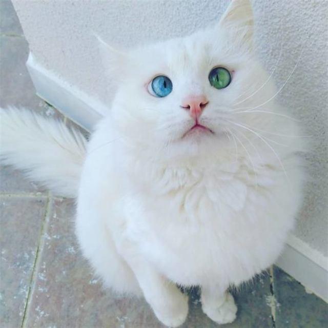 Кошечки с проблемными глазами, доказывают, что обаянием может обладать любой