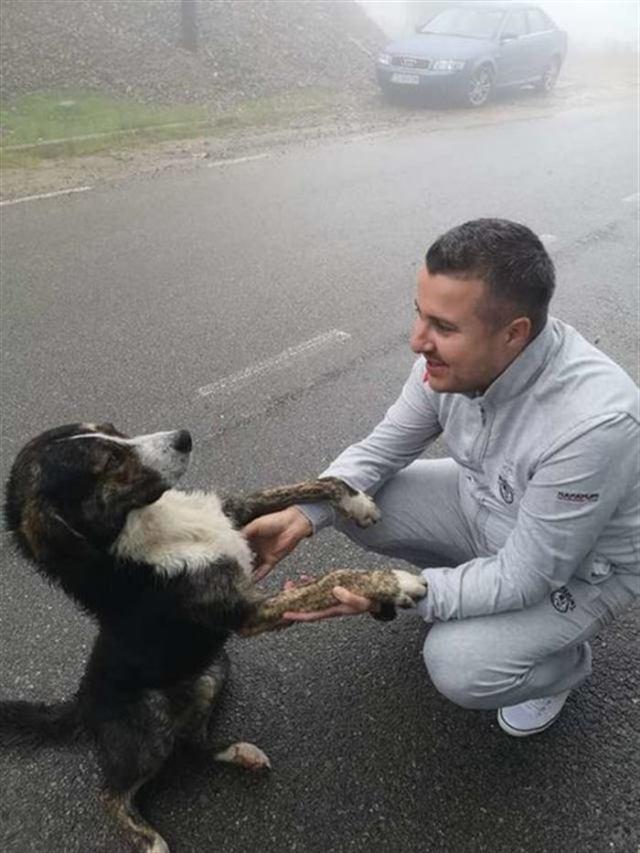 Бродячий пес спас раненого человека и нашел семью