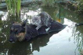 Совместные кошачье собачьи фотографии, которые вызывают в душе тепло
