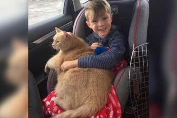 Мама разрешила сыну выбрать любое животное из приюта. Малыш выбрал старого и толстого кота