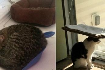 18 смешных котов, которые не умеют пользоваться кошачьей лежанкой
