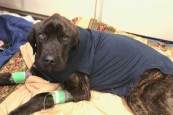 Женщина месяц морила голодом собаку бросившего ее бойфренда