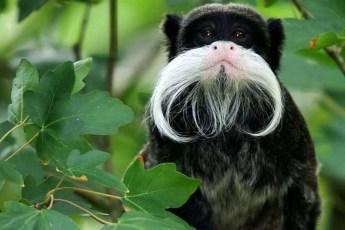 25 странных животных, которые будто нарисованные в фотошопе