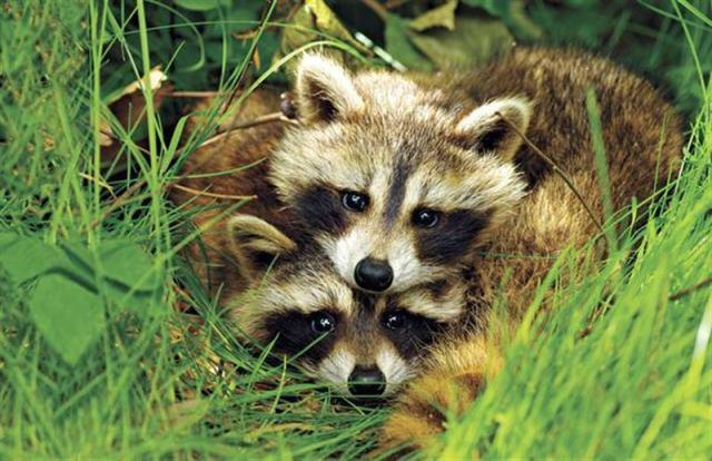 Самые милые парочки в дикой природе