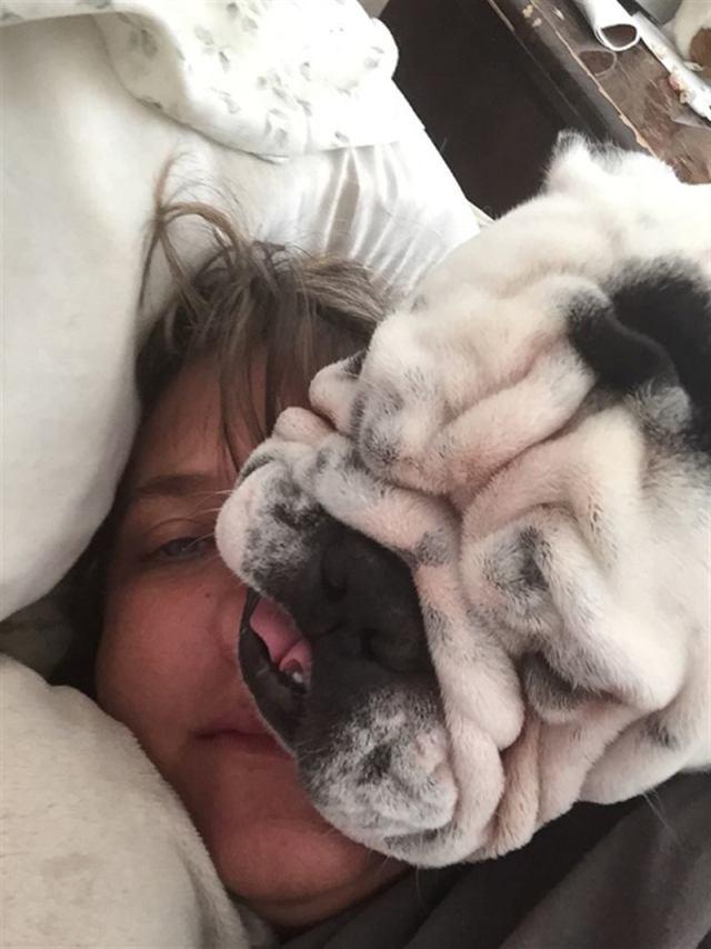 Смешные собаки, которые любят пренебрегать приватным пространством
