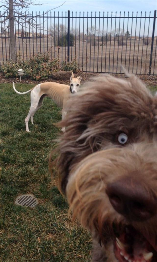 Собаки, которые своим появлением испортили кадр