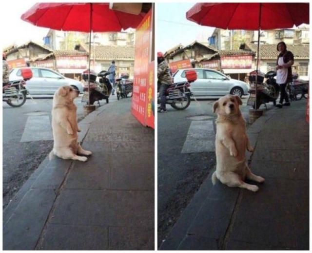 Немного странные, но весьма привлекательные собаки