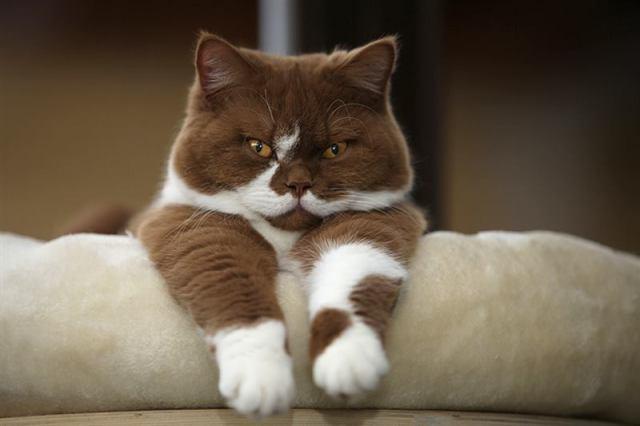 Думай как кот