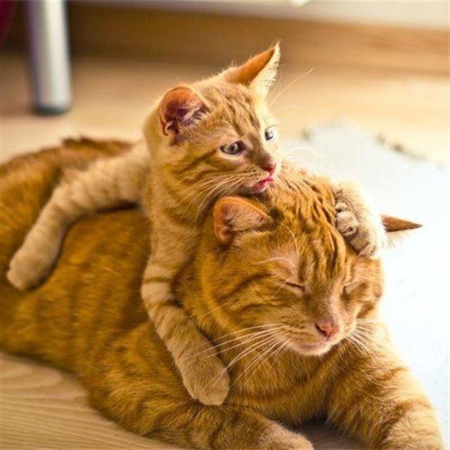 Милые, маленькие копии своих родителей