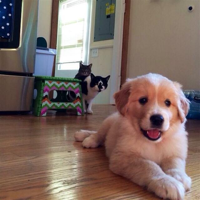 Забавная реакция котов на появление в доме нового щенка