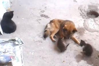 Кошка и собака – крепкая дружба в несколько поколений