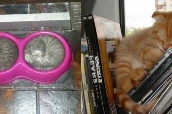 Самые милые фотографии спящих котиков