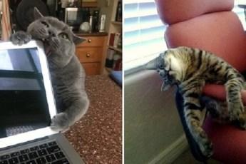 Невероятно забавные коты