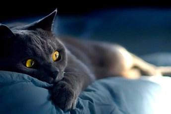 Как кошки информируют о присутствии негатива в доме