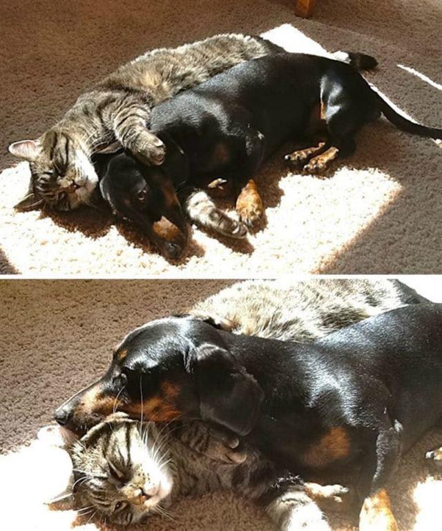 Кошки очень любят солнышко и не скрывают этого