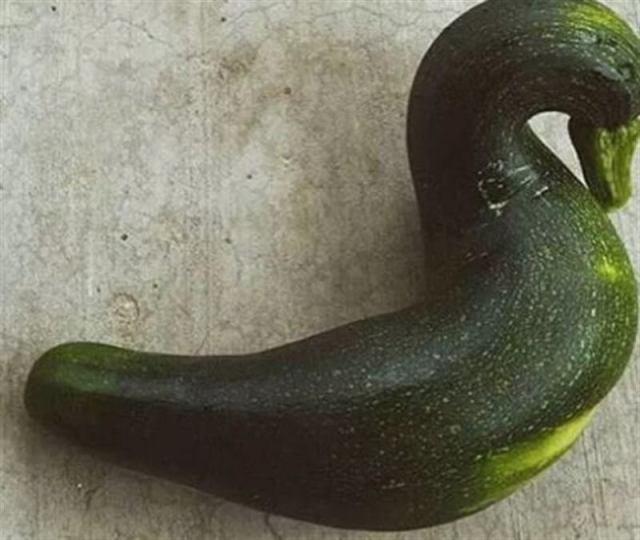 Интересные сюрпризы, которые можно обнаружить на огороде