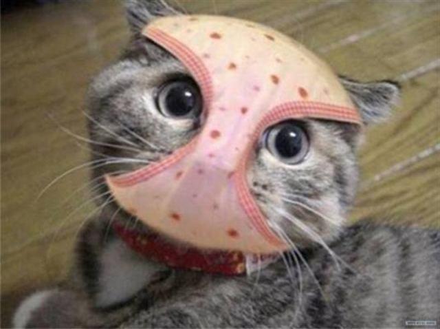 Забавные котики пытающиеся нарушить закон