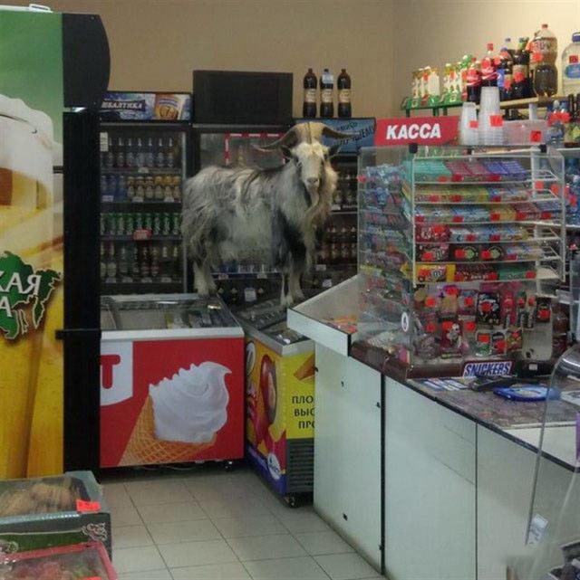 Чего только не встретишь на полках супермаркетов