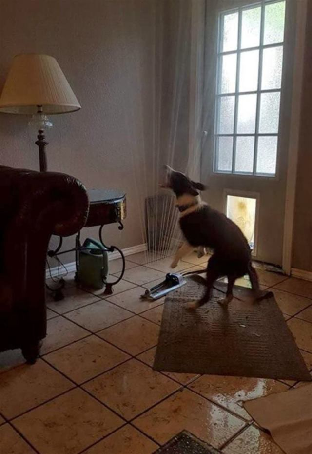 Смешные происшествия с забавными собаками