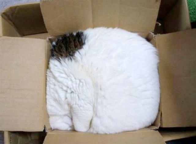 20 смешных фотографий кошек в коробках, вазочках и других труднодоступных местах