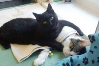 Добрейшая история об огромном кошачьем сердце, которое готово согреть и утешить абсолютно всех