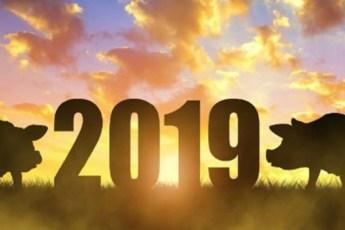 Главное слово-девиз для каждого знака зодиака на год Жёлтой Свиньи 2019