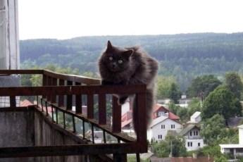 Телепортация кота Васьки-Ангела