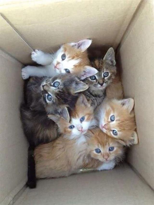 Милые и забавные котики, которые поднимут настроение и развеют грусть