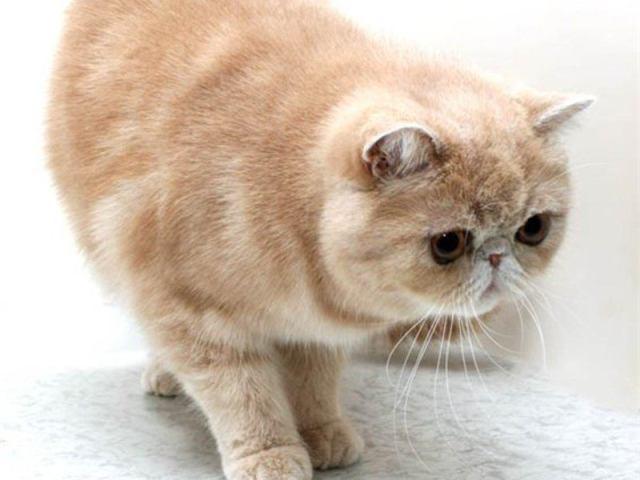 Самые общительные породы кошек: выбираем друга