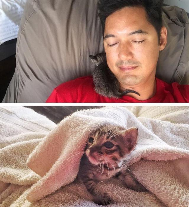 Одна встреча на пляже изменила две жизни – человека и кота