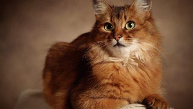 Сколько лет коту по человеческим меркам