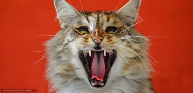 Минусы жизни кошки в квартире: как их обойти