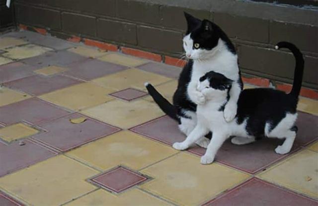 Забавные фоточки с котейками