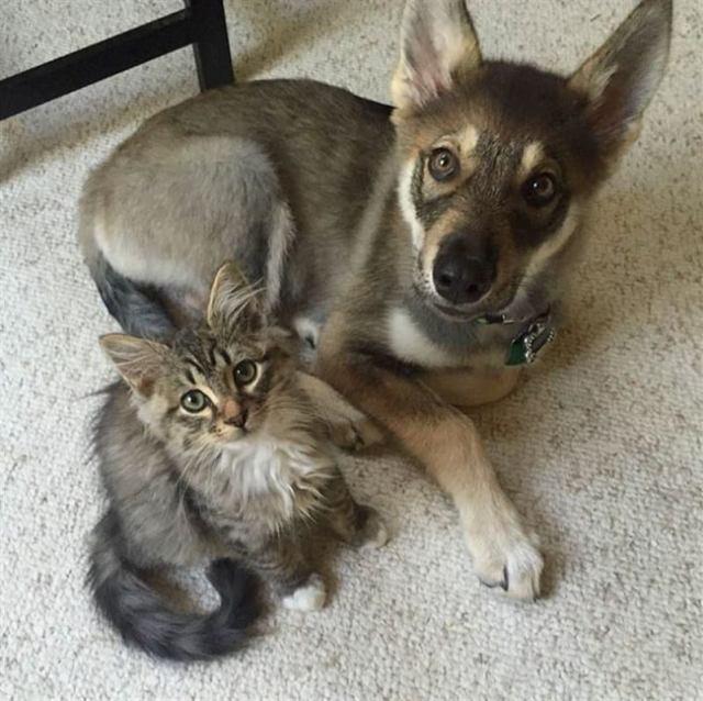 Пес сам выбрал себе в друзья котенка из приюта, с тех пор они неразлучны