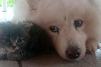 Этот серый комочек так бы и погиб на улице, но пес его нашел и спас