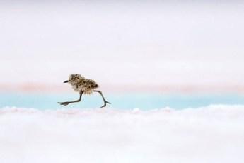 25 впечатляющих снимков с конкурса на лучшую фотографию дикой природы 2018