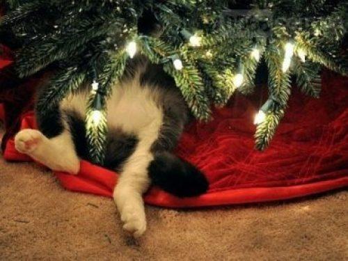 Новогодние котики для хорошего настроения в праздник