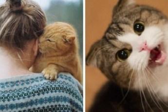 10 признаков того, что ваша кошка любит вас