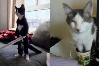 Смешные котики, которые украсят твой день