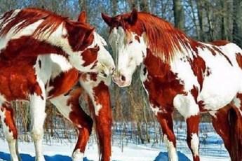 Топ 10 самых красивых лошадей на планете!